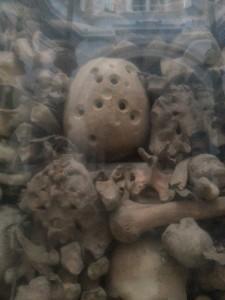 the Otranto skull